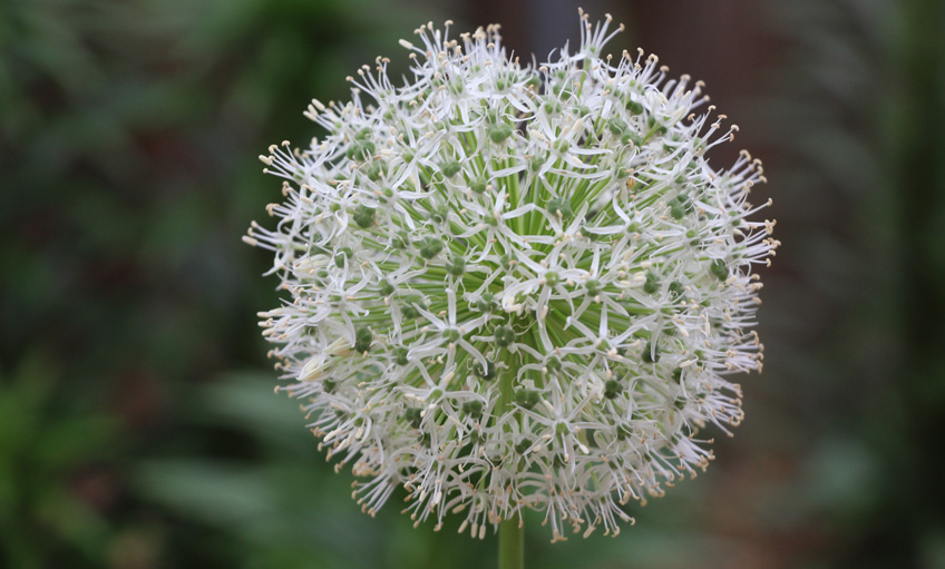 Snowball-in-July-web