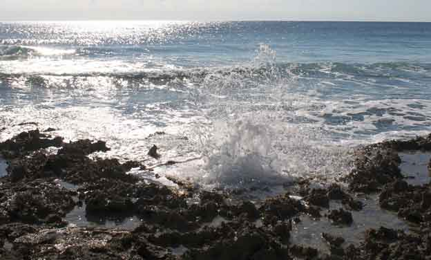 Art---Cozumel-Rugged-Beach_web