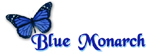 blue_monarch_150